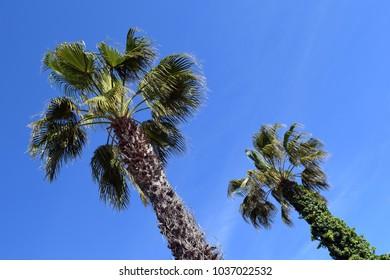 Palm trees. Marmaris. Turkey