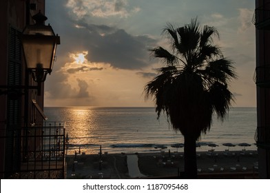 palm trees of the Mediterranean at dawn