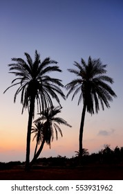 Palm trees and the Mediterranean Sea, Park of Ashkelon in Israel