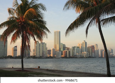Palm trees and the Miami skyline during late afternoon.