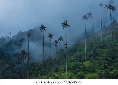 Palm trees in the mist