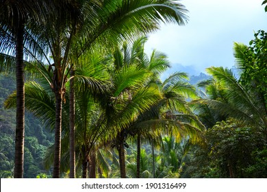 Palm trees and mountain landscape, tropical nature photo. Tropical island mountain hiking. Optimistic travel banner template. South Asia landscape