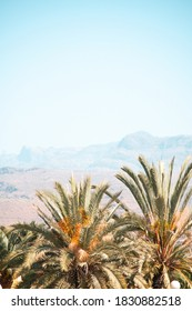 Palm trees and mountains in Gran Canaria, Spain