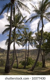 Palm trees and mountains in Hawaii