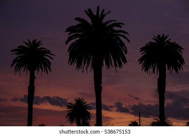 palm trees near the beach at sunset