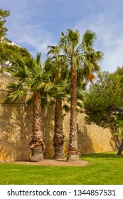 Palm trees near the city wall in Tarragona, Spain
