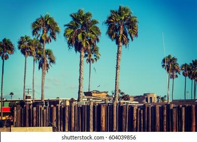 palm trees in Newport Beach, California
