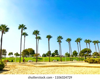 Palm trees next to beach under bright blue skyline at Long Beach California