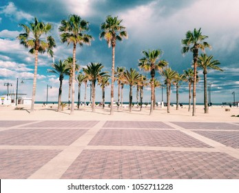 Palm trees next to the beach in Valencia, Spain - during  some cloudy day. Promenade in Malvarosa, Valencia.