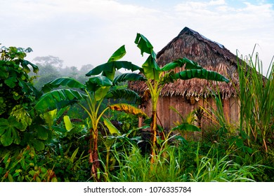 Palm trees next to traditional amazonian house in amazonian village nearby Iquitos, peru