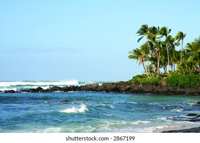 Palm trees in Oahu, Hawaii's North Shore