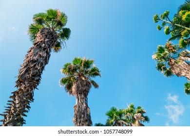 Palm trees, Oedo-Botania island at summer day in Geoje, Korea