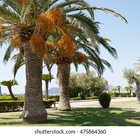 Palm trees, oleanders and olive trees on lawn in parkland in front of Sveti Stefan island pictured on sunny summer day. Sveti Stefan, Budva, Montenegro
