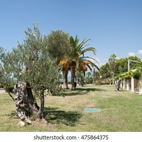 Palm trees and olive trees on lawn in parkland in front of Sveti Stefan island pictured. Sveti Stefan, Budva, Montenegro