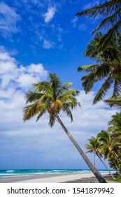 Palm trees on an african beach