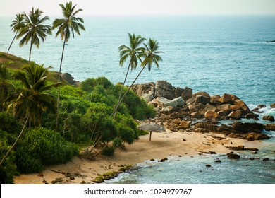Palm trees on background of ocean