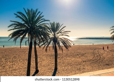 Palm trees on Barceloneta beach. Barcelona, Spain.