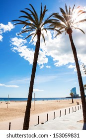 palm trees on the beach, Barcelona