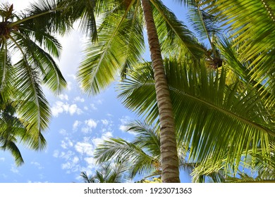 Palm trees on a beach in the Caribbean Sea. Punta Cana. Saona Island