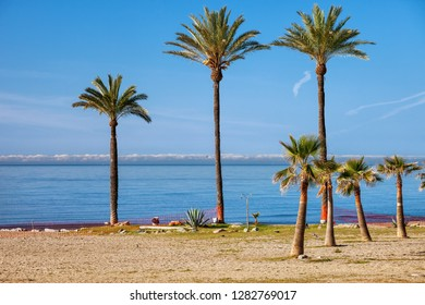 Palm trees on a beach at Costa del Sol in Marbella, Andalusia, Spain