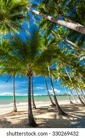 Palm trees on the beach of Palm Cove in Queensland, Australia