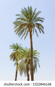 Palm trees on the beach in Egypt on the Red Sea