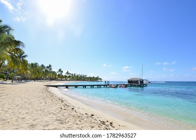 palm trees on the beach on the island in the Caribbean surrounded by the sea
