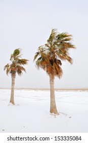 palm trees on the beach in january