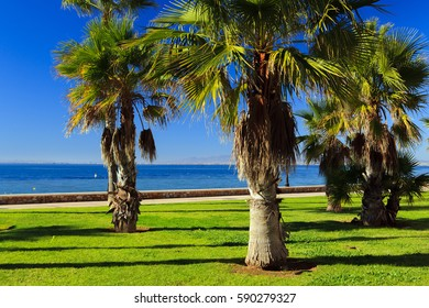 Palm trees on the beach, landscape Spain