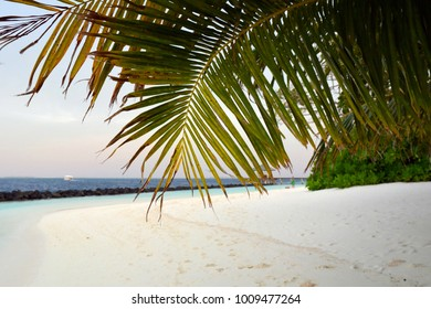 Palm trees on the beach in Maldives