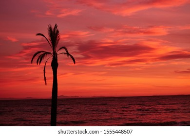 Palm trees on the beach in Marbella. Andalusia. Luxury vacation by the sea. Spain, Marbella, a beach with palm trees in a resort town on the Costa del Sol in the Mediterranean Sea. Marbella sunset