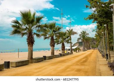 Palm trees on beach promenade in resort of Calella on Costa Brava Spain.