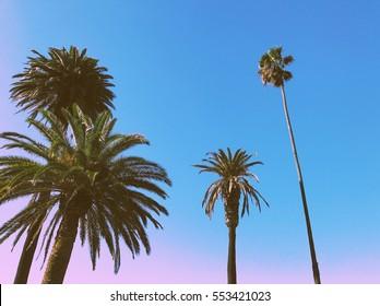 Palm trees on the beach in Santa Monica, Los Angeles
