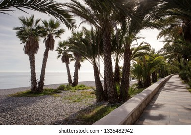 palm trees on a beach in spain