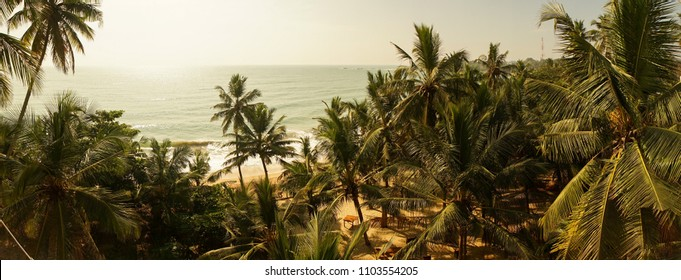 Palm trees on a beach in Tangalle, Sri Lanka.