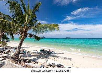 Palm trees on the beach. Thailand