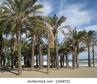 Palm Trees on a Beach in Torremolinos, Spain