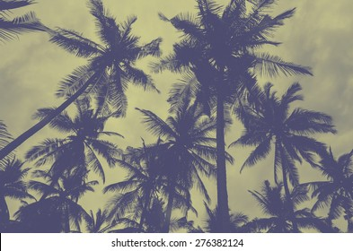 Palm trees on the beach .vintage style