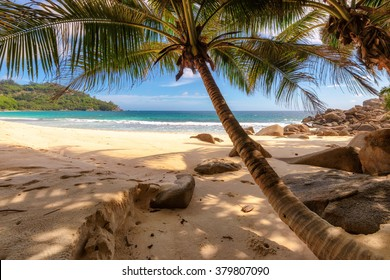 Palm trees on beautiful beach at Seychelles, Mahe