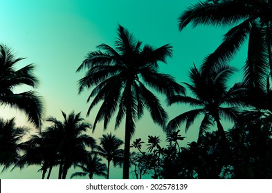Palm trees on the beautiful sunset background.