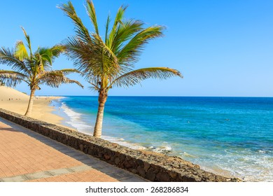 Palm trees on beautiful tropical beach in Morro Jable town, Fuerteventura, Canary Islands, Spain