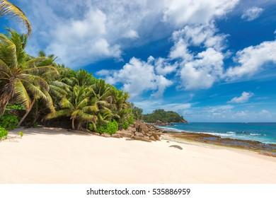 Palm trees on beautiful unspoilt beach at Seychelles, Mahe
