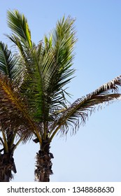 Palm trees on the ble sky