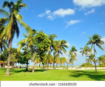 Palm trees on blue sky Miami beach Florida United State