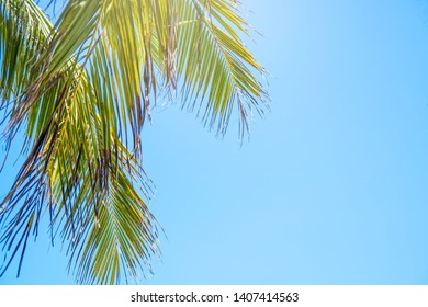 Palm trees on blue sky background . travel, summer, vacation and tropical beach . coconut palm trees .