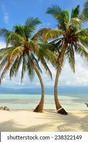 Palm trees on a caribbean beach