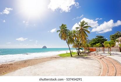 The palm trees on Caribbean beach, Martinique Island. Le Diamant Beach