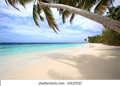 Palm trees on exotic beach
