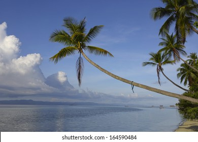Palm trees on exotic tropical island coastline in Raja Ampat, West Papua