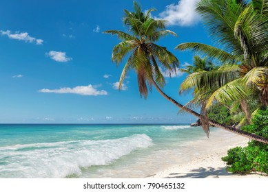 Palm trees on exotic tropical beach. Summer holiday and vacation concept background.